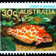 Postage stamp Australia 1984 Choati Leopard Wrasse, fish — Stock Photo