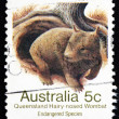 Stock Photo: Postage stamp Australi1981 Queensland Hairy-nosed Wombat