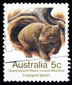 Postage stamp Australia 1981 Queensland Hairy-nosed Wombat — Stock Photo