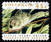 Postage stamp Australia 1992 Little Pygmy Possum — Stock Photo