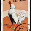 Stock Photo: Postage stamp Cub1981 Blanco, Fighting Cock