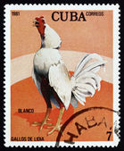 Postage stamp Cuba 1981 Blanco, Fighting Cock — Stock Photo