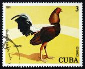 Postage stamp Cuba 1981 Cenizo, Fighting Cock — Stock Photo