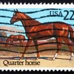 Postage stamp USA 1985 Quarter Horse, Race Horse — Stock Photo