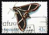 Postage stamp Australia 1991 Hawk Moth, Insect — Stock Photo
