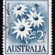 Postage stamp Australi1957 Flannel Flower, Herbaceous Shrub — Stock Photo #22804706