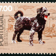Postage stamp Portugal 1981 Cao de Agua, Breed of Dog from Portu — Stock Photo