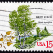 Postage stamp USA 1978 Gray Birch, Deciduous Tree - Stock Photo
