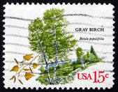 Postage stamp USA 1978 Gray Birch, Deciduous Tree — Stock Photo