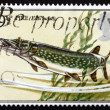 Postage stamp GB 1983 Pike fish — Stock Photo