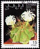 Postage stamp Sahara 1993 Gymnocalycium, Cactus — Stock Photo