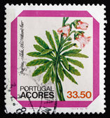 Postage stamp Portugal 1982 Azores Bellflower, Dwarf Shrub — Stock Photo