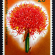 Royalty-Free Stock Photo: Postage stamp Rwanda 1966 Blood Lily, Flower