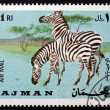 Postage stamp Ajman 1969 Plains Zebra, Equus Quagga, Animal - ストック写真