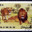 Postage stamp Ajman 1969 African Lion, Panthera Leo, Animal - Stock Photo