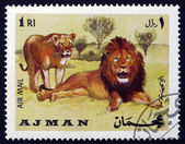 Postage stamp Ajman 1969 African Lion, Panthera Leo, Animal — Stock fotografie
