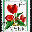 Postage stamp Poland 1977 Dog Rose, Forest Fruit — Stock Photo