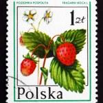 Postage stamp Poland 1977 Wild Strawberry, Forest Fruit — Stock Photo