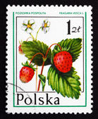 Postage stamp Poland 1977 Wild Strawberry, Forest Fruit — Stock Photo