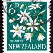 Postage stamp New Zealand 1960 Pikiarero, Clematis Forsteri, Flo — Stock Photo