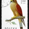 Postage stamp Poland 1975 Lesser Kestrel Falcon - Stock Photo