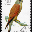 Postage stamp Poland 1975 Common Kestrel, Falcon — Стоковая фотография