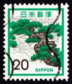 Postage stamp Japan 1972 Pine, Tree, Pinus — Stock Photo