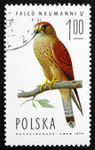 Postage stamp Poland 1975 Lesser Kestrel Falcon — Stock Photo