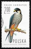 Postage stamp Poland 1975 Hobby Falcon, Bird of Prey — Stock Photo