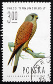 Postage stamp Poland 1975 Common Kestrel, Falcon — Stock Photo