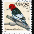 Postage stamp USA 1996 Red-headed Woodpecker, Bird — Stockfoto