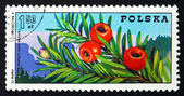 Postage stamp Poland 1975 Yew Branch with Berries — Zdjęcie stockowe