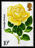 Postage stamp GB 1976 Grandpa Dickson, Painted Rose — Stock Photo