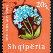 Stock Photo: Postage stamp Albani1965 Alpine Forget-me-not, Flower