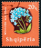 Postage stamp Albania 1965 Alpine Forget-me-not, Flower — Stock Photo