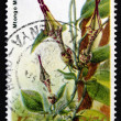 Postage stamp Kenya 1983 Ceropegia Ballyana, Flowering Plant - Stock Photo