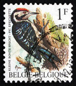 Postage stamp Belgium 1990 Lesser Spotted Woodpecker, Bird — Stock Photo