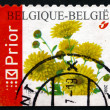 Stock Photo: Postage stamp Belgium 2005 Chrysanthemums, Perennial Flowering P