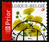 Postage stamp Belgium 2005 Chrysanthemums, Perennial Flowering P — Stock Photo