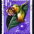 Postage stamp Yugoslavi1957 Belladona, Perennial Herbaceous Pl — Stock Photo #26004411