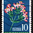 Postage stamp Yugoslavia 1956 European Centaury, Medical Herb — Stock Photo