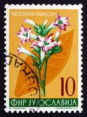 Postage stamp Yugoslavia 1955 Tobacco, Perennial Herbaceous Plan — Stock Photo