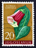 Postage stamp Yugoslavia 1959 Henbane Bell, Poisonous Plant — Stock Photo