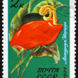 Stock Photo: Postage stamp Russia 1971 Flamingo Flower, Anthurium