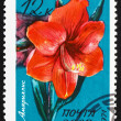 Postage stamp Russia 1971 Belladonna Lily, Amaryllis — Stock Photo