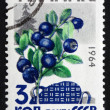 Stock Photo: Postage stamp Russi1964 Huckleberries, Billberries