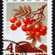Stock Photo: Postage stamp Russi1964 Mountain Ash, Rowan, Deciduous Tree