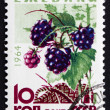 Stock Photo: Postage stamp Russi1964 Blackberries, Bramble, Perennial Plant