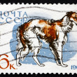 Stock Photo: Postage stamp Russi1965 Borzoi, Breed of Dog