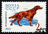 Briefmarke russlands 1965 irish red setter, hunderasse — Stockfoto